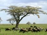 Туры в Казиламихунду, Танзания